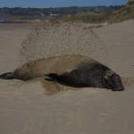 ...eine Flosse Sand bitte!
