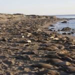 Robbenmeer