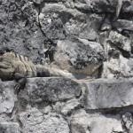 Tempel-wächter von Tulum
